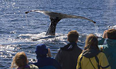 A whale watching cruise during a family vacation in the Western Cape.