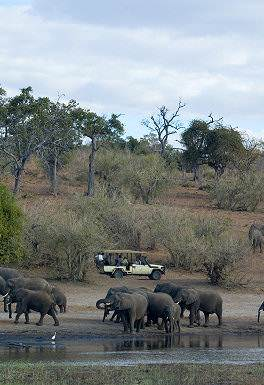 A safari vehicle pauses alongside elephants drinking from the Chobe River.